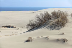 Curonian spit Stock Photo