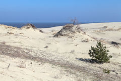 Curonian spit Stock Photography