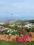 Curonian Spit shore, Lithuania. Beautiful flowers on Curonian spit shore in Juodkrante, Lithuania stock photo