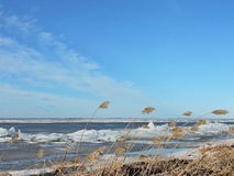 Curonian Spit shore in winter, Lithuania Royalty Free Stock Photography