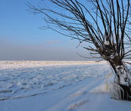Curonian Spit shore in winter, Lithuania Stock Images