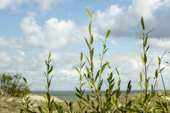 The Curonian Spit. View of the Curonian Spit with a height Efa in Kaliningrad Oblast, Russia stock photography