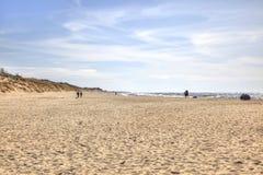 curonian spotta Segla utmed kusten av det baltiska havet Fotografering för Bildbyråer