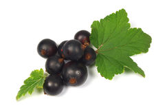 Currant. Macro photo of black currant with leaves isolated on white stock images