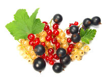Currant. Macro photo of red, white and black currant with leaves isolated on white Royalty Free Stock Photography