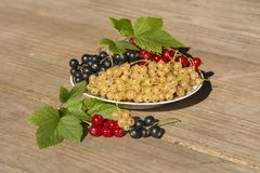 currant fotografia de stock royalty free