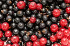 Currant Royalty Free Stock Photos