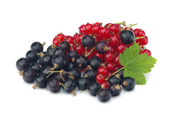 Currant 18 Royalty Free Stock Photo