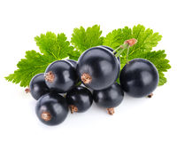 currant imagem de stock royalty free