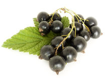 Currant. A blackberry is isolated on a white background Royalty Free Stock Photos
