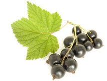 Currant. A blackberry is isolated on a white background Stock Photos