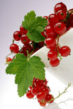 Currant. Red currant on white Stock Images