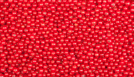 Currant background Stock Image