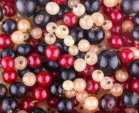 Currant background. Red, white and black currant Royalty Free Stock Images