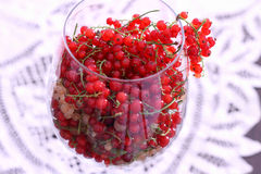 Currant in balloon wine glass Stock Photography