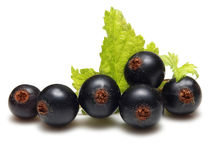 Currant berries ( blackcurrants) Stock Images