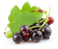 Currant berries with green leaf Stock Photography