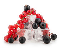 Currant stock image