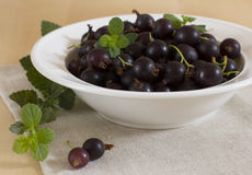 Currant. The berry containing useful microcells and vitamin C Royalty Free Stock Image