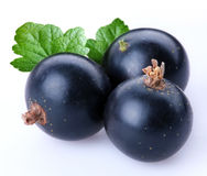 Currant black Stock Photography
