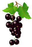 Currant black on bench Royalty Free Stock Images