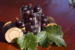 Currant. Black currants in a glass. Still life Stock Photography