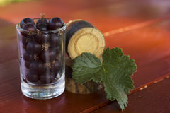 Currant. Black currants in a glass. Still life. Macro photo Stock Image