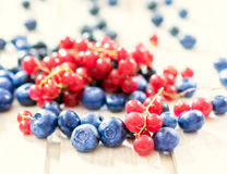 Currant and bluberries Royalty Free Stock Photography