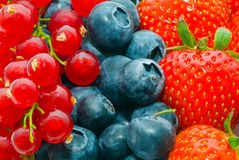Currant, blueberry, Royalty Free Stock Images