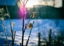 Currant bush in November royalty free stock photos