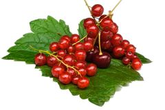 Currant and cherry Royalty Free Stock Images