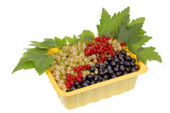 Currant in container Royalty Free Stock Photo