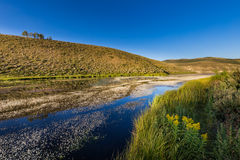 Currant Creek Reservior. This photo was taken at Currant Creek Reservoir in Utah and contains water plans, grass, flowers, and sky Royalty Free Stock Photos