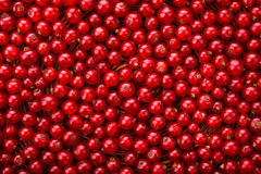 Currant different shades of bright red color. Mature, juicy, raw, fresh, tasty, healthy, nutritious concept. Royalty Free Stock Photos