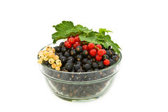 Currant in a glass bowl. Stock Photography