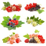 Currant and gooseberry Royalty Free Stock Image
