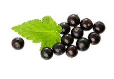 Currant with green leaf isolated on white.  Fresh black berry cu. Currant with green leaf isolated on white background.  Fresh black berry currant. Black currant Royalty Free Stock Photography