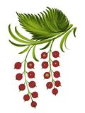 Currant. Hand drawn, , illustration in Ukrainian folk style Royalty Free Stock Images