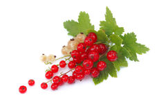 Currant isolated on white Royalty Free Stock Image