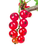 Currant Stock Photo