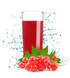 Currant juice Stock Photography