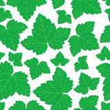 Currant leaves pattern seamless Royalty Free Stock Photography