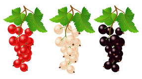 Currant red, black and white on bench Stock Photo