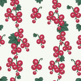 Currant seamless pattern Stock Photos