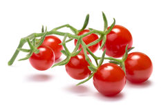Currant sweet pea tomatoes, paths Stock Images