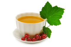 Currant tea Royalty Free Stock Photography