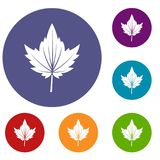 Currant tree leaf icons set. In flat circle red, blue and green color for web Stock Images