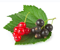 Currant on white background Royalty Free Stock Photography