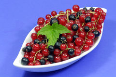 Currants Royalty Free Stock Photos