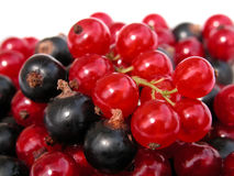 Currants stock photos